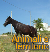 Animali e territorio